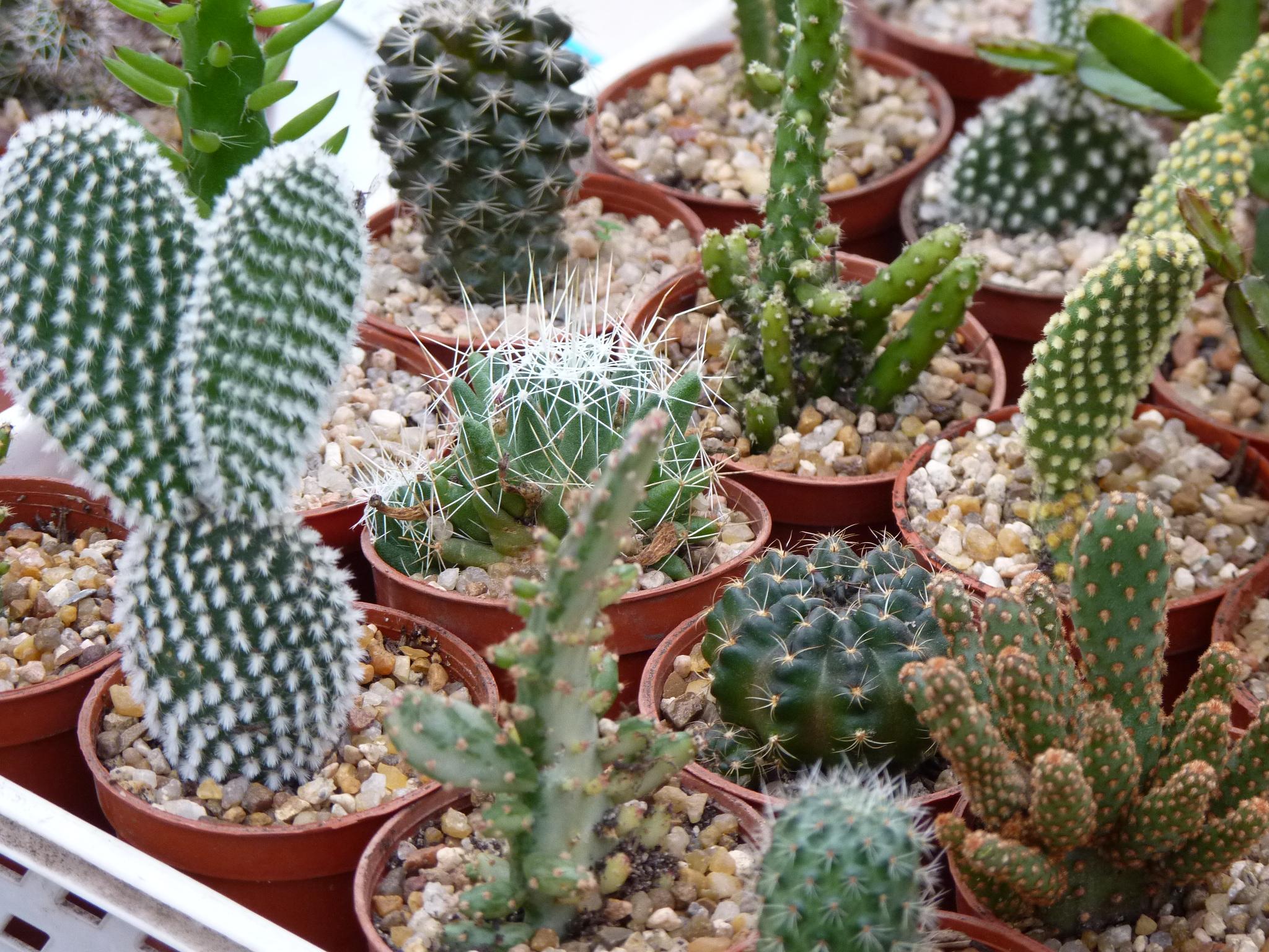 Foto vivero de cactus mar del plata buenos aires for Vivero de cactus en chile