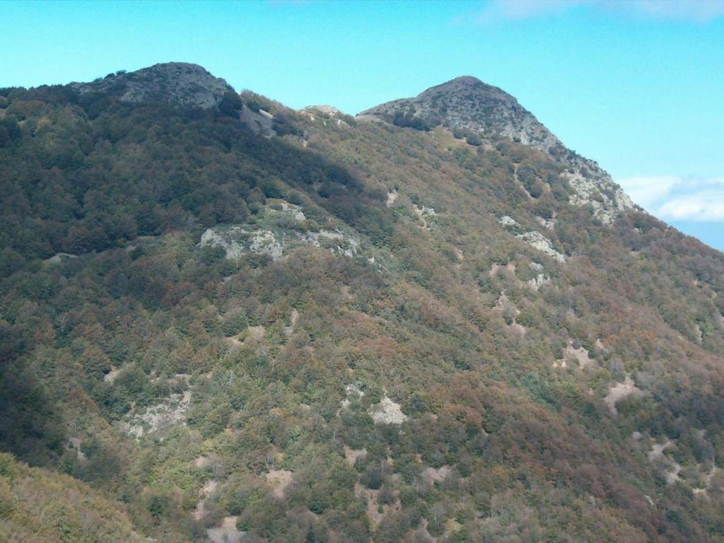 Foto de comarca del vall s oriental espa a - Immagini del cardellino orientale ...