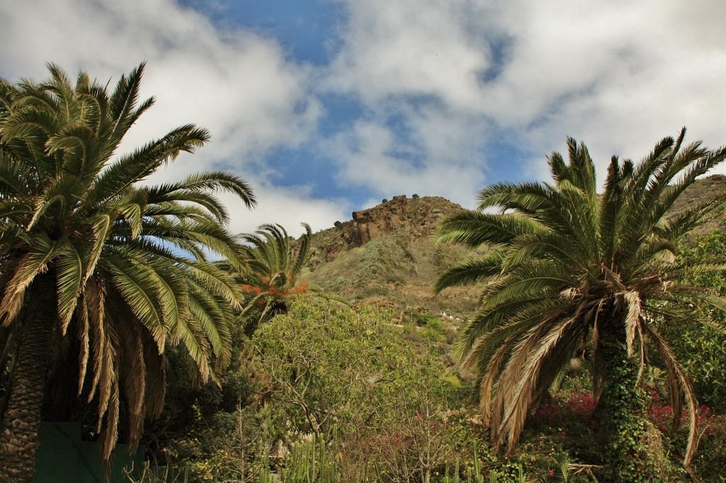 Foto jard n bot nico viera y clavijo tafira alta gran - Jardin botanico las palmas ...