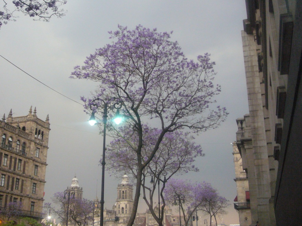 Foto de Df (The Federal District), México
