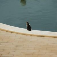 Foto: Me lo estoy pensando... - La Manga del Mar Menor