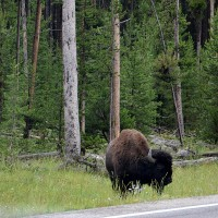 Foto: Western entrance of Yellowstone NP - Yellowstone NP, Estados Unidos