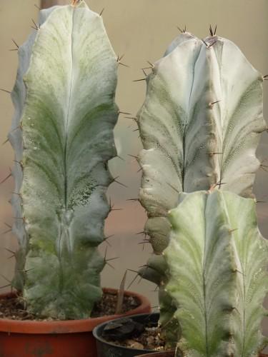 Foto vivero de cactus for Viveros en la plata
