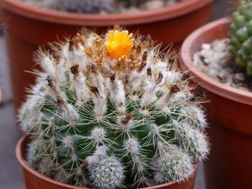 Foto vivero de cactus for Vivero de cactus en chile